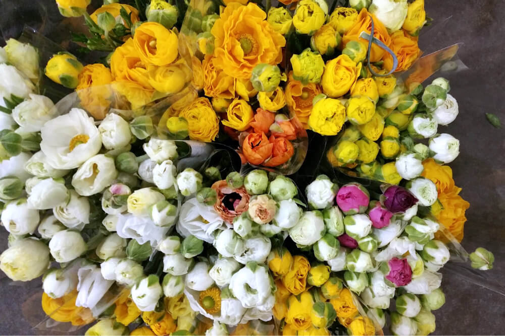 Many People I Admire Speak Wonders Of The Sydney Flower Markets Not Only Because Fresh Quality Flora That Pes Through Its Giant Halls Each Day