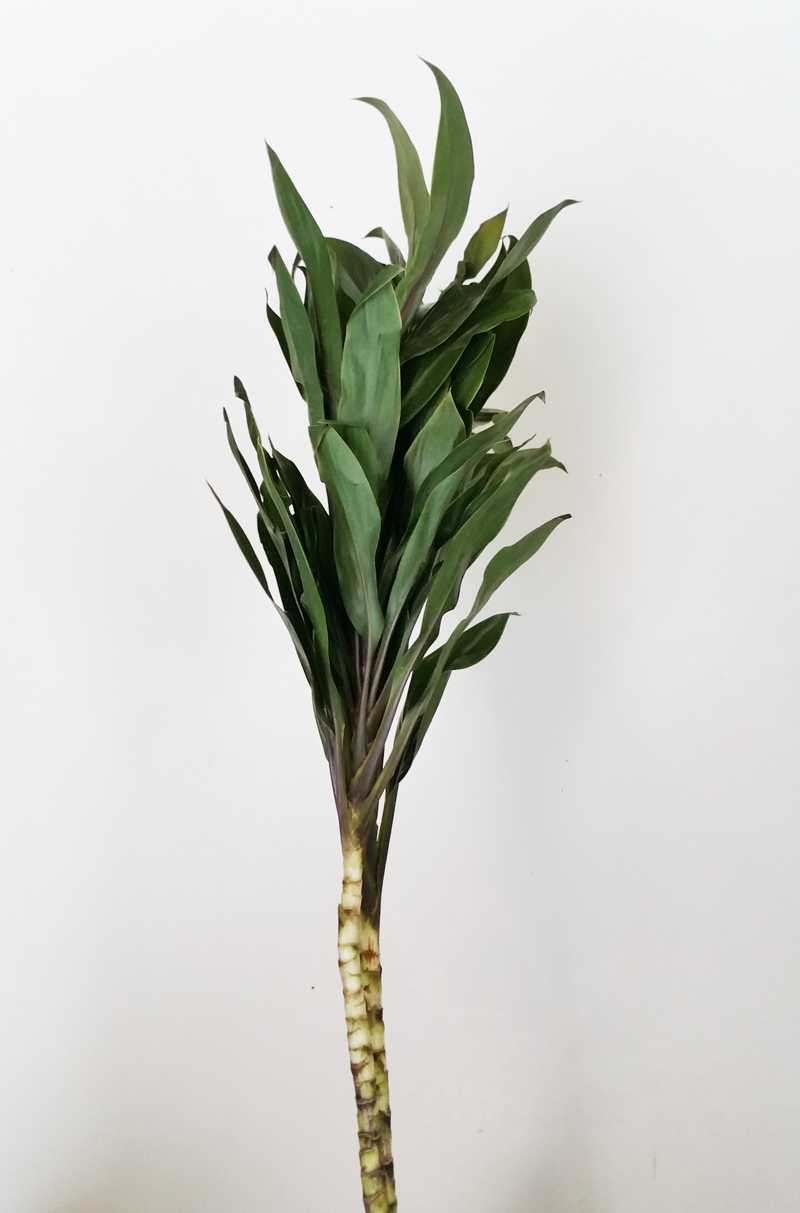 DIY-tropical-leaves