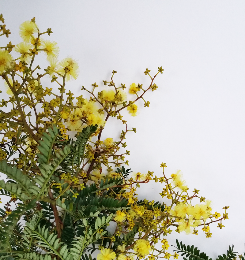 wattle-flower-box-sydney-