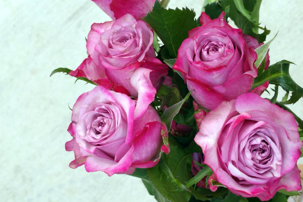 bloombox co pink ombre roses