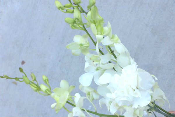 white singapore orchids bloombox co