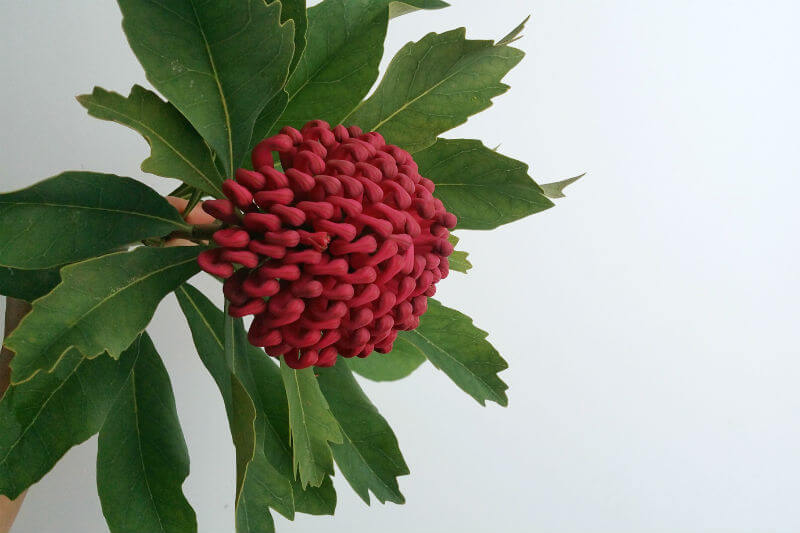 Waratah diy tutorial arrangement