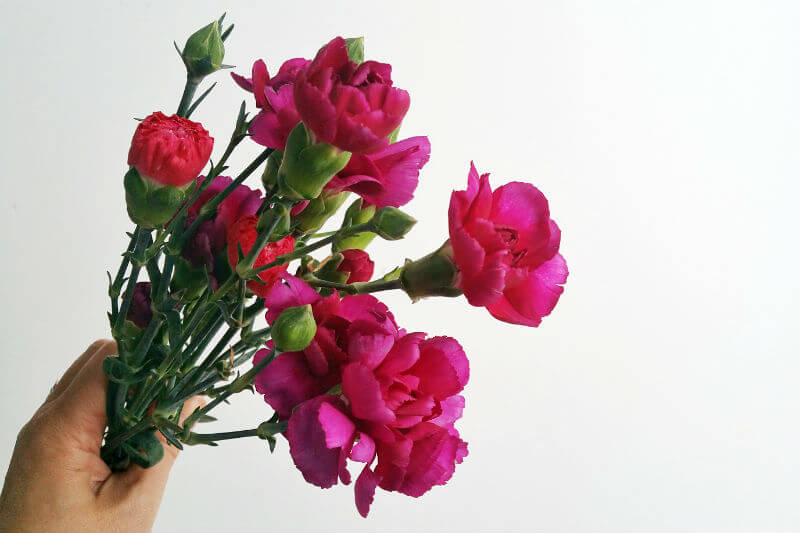 spray carnations diy tutorial arrangement