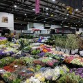 Sydney Flower Markets Stall - Bloombox Co