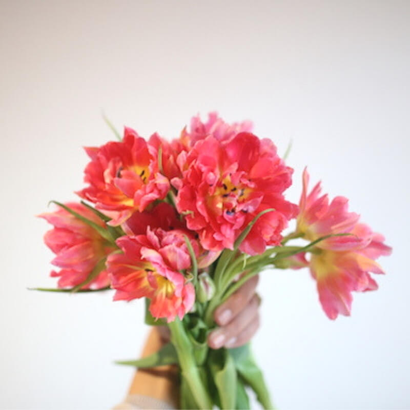 Double petalled coral tulips