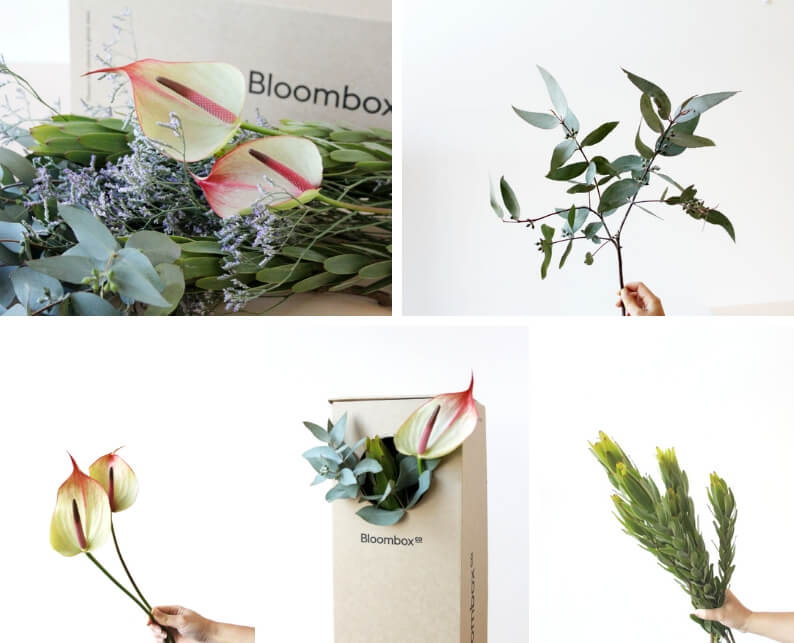 leucadendron and anthurium flower arrangement - what you'll need