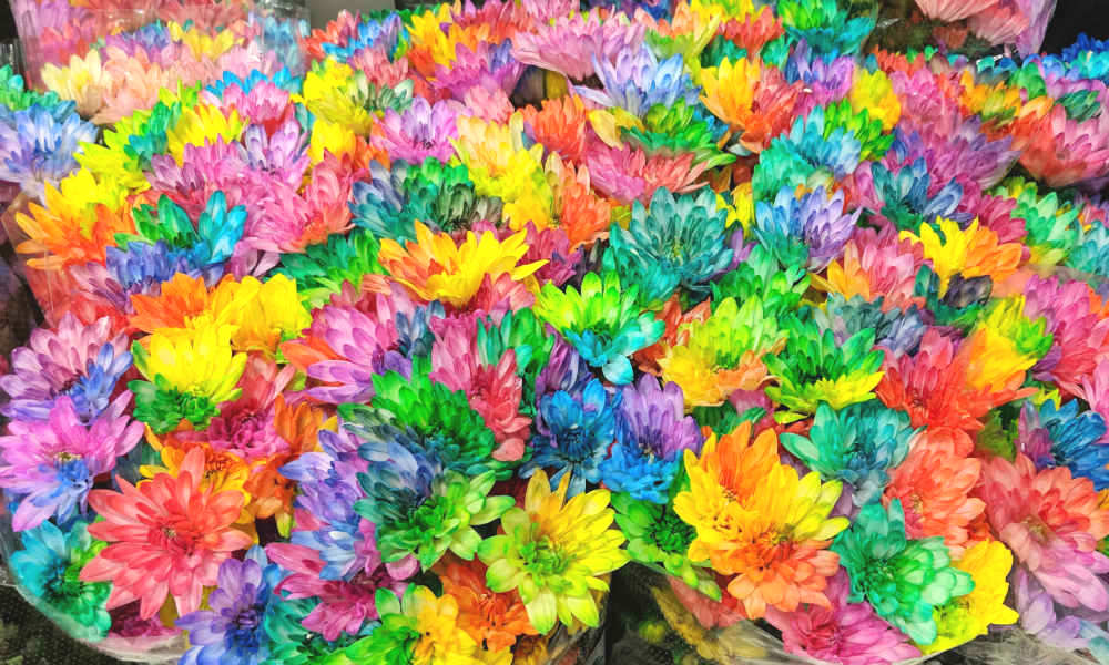 brightly dyed flowers out of fashion