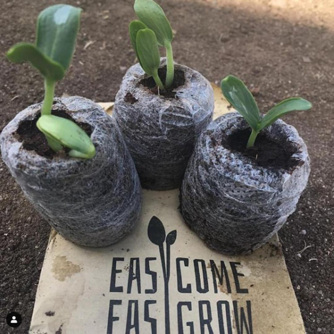 Easy Come Easy Grow Gardening Subscription Box Sydney Melbourne Delivered in Sydney and Melbourne