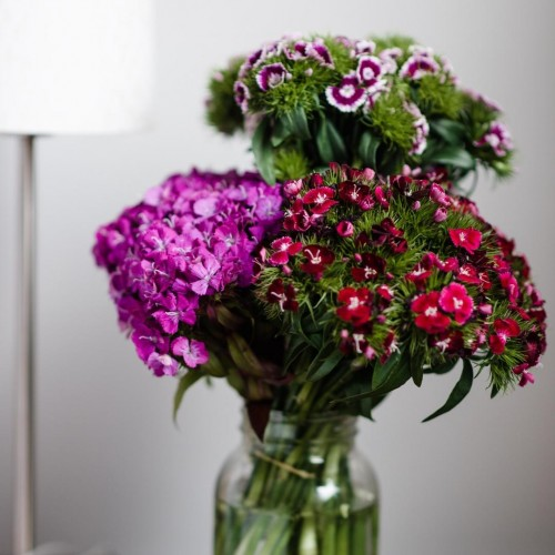 Mixed Sweet William Close Up