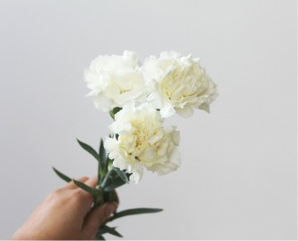 Blank Space White Carnations